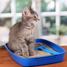 Чем мыть кошачий лоток, чтобы не было запаха